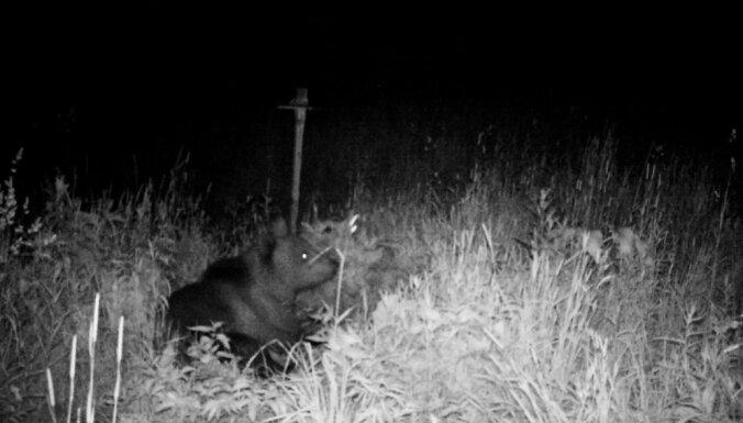 ФОТО: Косолапый гость - в Огрском крае к дому подошел медведь