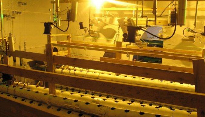 Latvijā pērn turpinājusi būtiski pieaugt narkotiku saturošu augu audzēšana