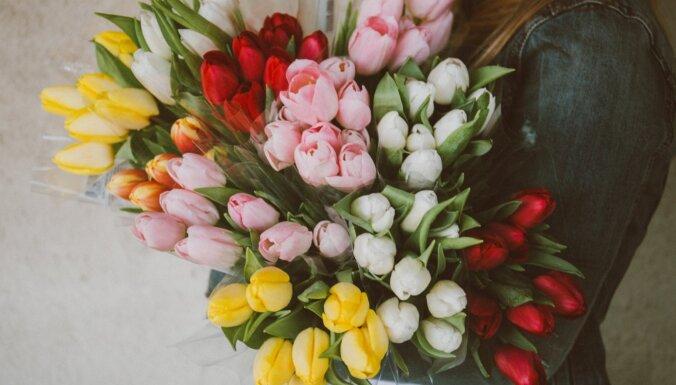 Iecienītākie ziedi 8.martā – tulpes. Kā parūpēties par grieztajiem ziediem