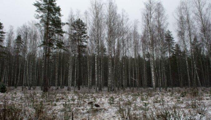 В первой половине декабря в Латвии ожидается мало осадков