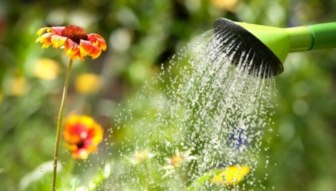 Утро или вечер, полдень или полночь: Когда лучше всего поливать растения?