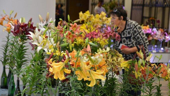 Цветочный сезон продолжается: Пять выставок лилий в Риге и других местах Латвии