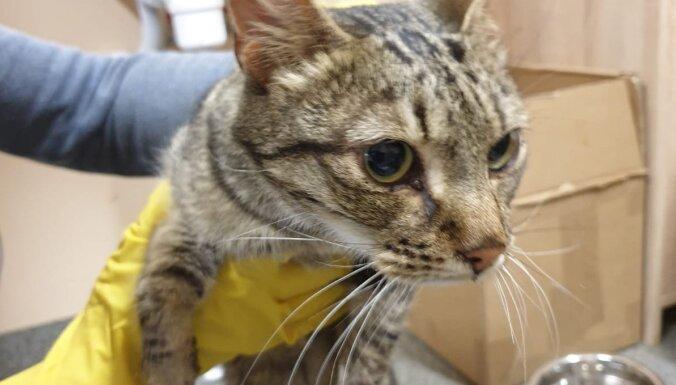 ФОТО. Рига: в квартире нашли 20 измученных голодом котов, животным нужна помощь