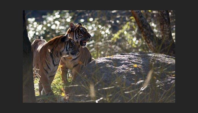 Из зоопарка в Германии сбежали львы, тигры, ягуар и медведь