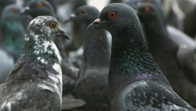 Пожилой мужчина расстреливал с балкона голубей: убита 21 птица