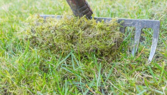 Новые правила: в Риге станут реже косить газон, а тротуар нельзя будет посыпать чистой солью