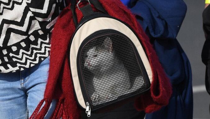 Ministrija Krievijā mājdzīvnieku svara ierobežojumu noteikšanu lidmašīnās atzīst par nepiedienīgu