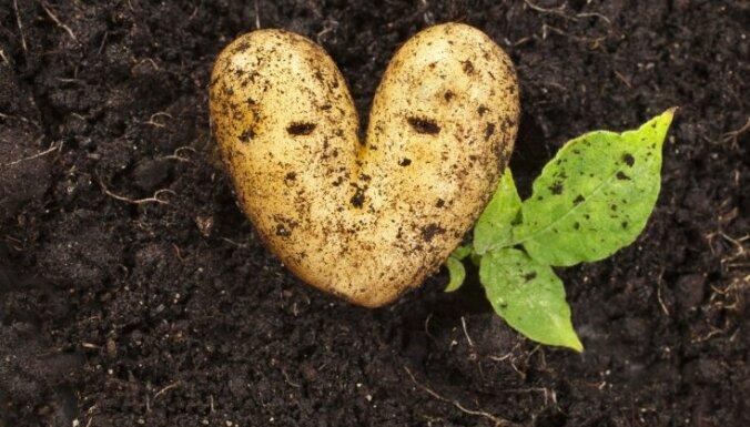 Vita Vestmane: Vai jūtamies droši par savu sirdi?
