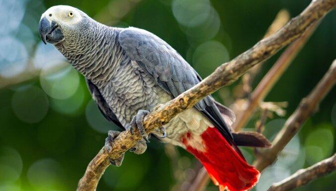 Пять попугаев в зоопарке в Англии провоцировали друг друга материться. Их пришлось рассадить