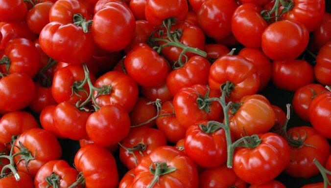 Kā izvēlēties gardākos tomātus?
