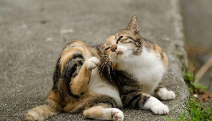 Kasīšanās un intensīva sevis laizīšana – svarīgākais par alerģijām mājas mīlulim