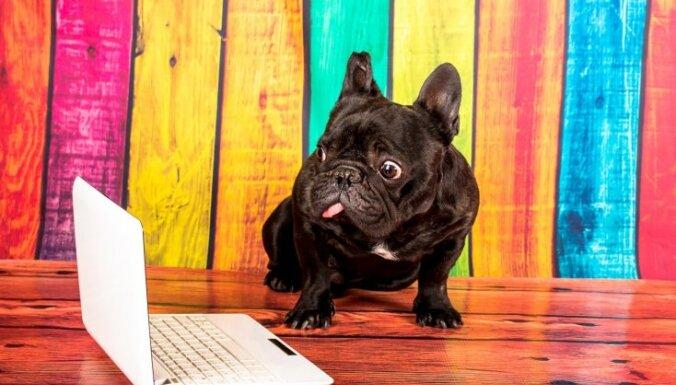 'Google' zina visu! 2016. gada meklētākie jautājumi par suņiem