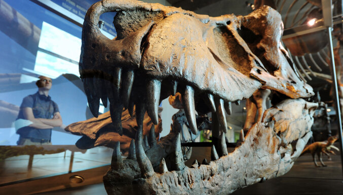 Найден самый древний динозавр. Останкам 168 миллионов лет