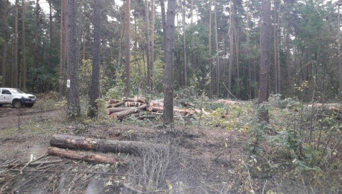 Plāno cirti teju 30 hektāru platībā Biķernieku mežā