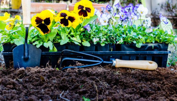 Календарь садовода: чем заняться на участке в мае