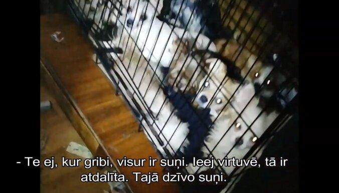 Video: Pārdaugavā kādā dzīvoklī kārtības sargi izņem 58 suņus