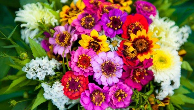 Zinību dienas gaidās: vienkārši ziedu pušķi no tā, kas aug dārzā