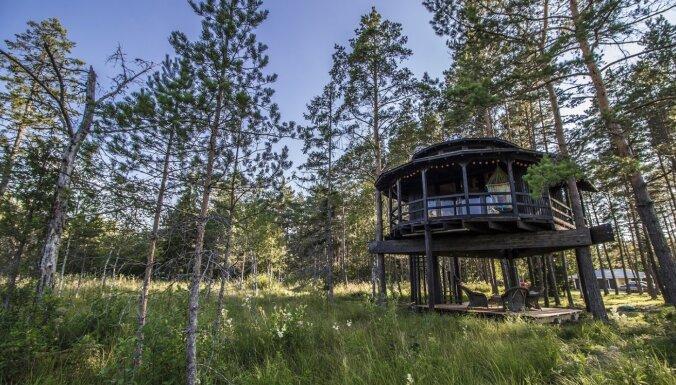ФОТО. Три домика на деревьях всего в 30 минутах езды от Таллина