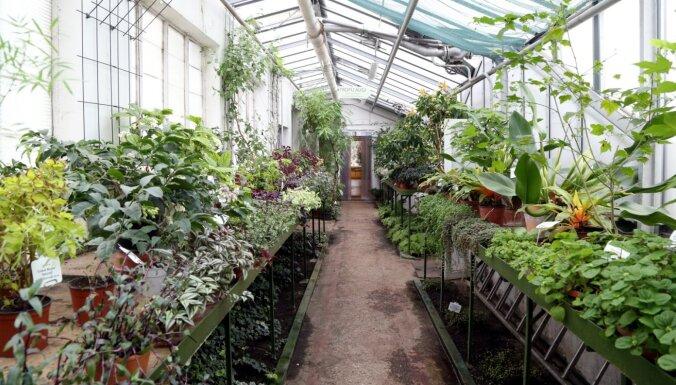 Jauna tematiskā nodarbība skolēniem – profesiju daudzveidība LU Botāniskajā dārzā