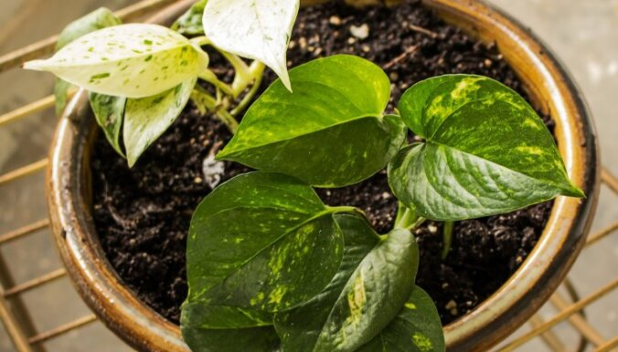 NASA рекомендует: 17 комнатных растений, которые очищают воздух лучше всего