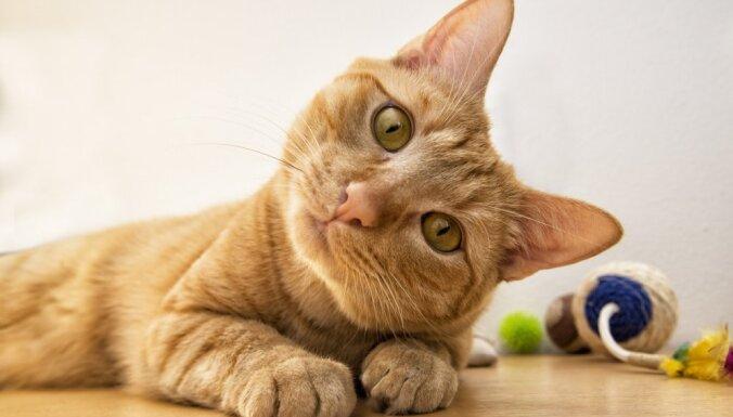 Играйте как минимум 20 минут в день: четыре совета, чтобы домашний кот был весел и здоров