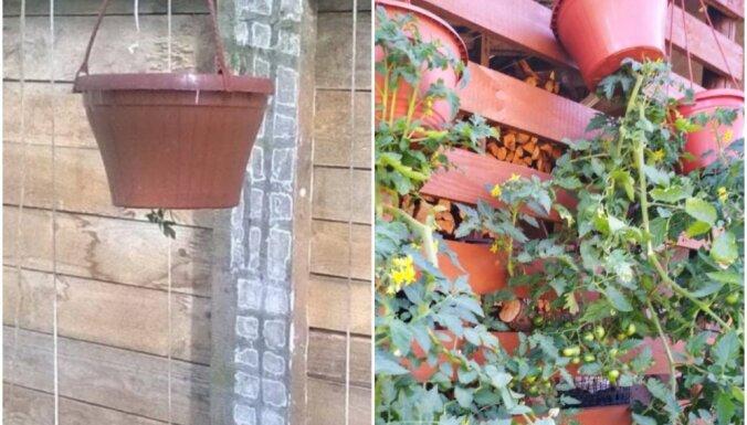 Iedvesmas deva radošai tomātu audzēšanai