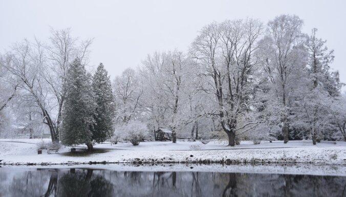 Foto: Baltā ziemas pasaka Nacionālajā botāniskajā dārzā