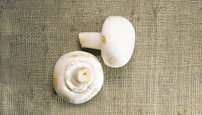 Азбука кухни: пять видов вкусных грибов, которые мы упускаем из виду