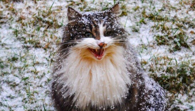 Šonedēļ gaisa temperatūra paaugstināsies un sniegs nokusīs
