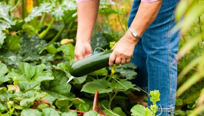 Советы врача: как работать в саду с пользой для здоровья