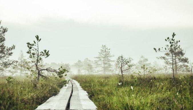 Foto: Spirdzinoša rīta pastaiga Niedrāju - Pilkas purva takā