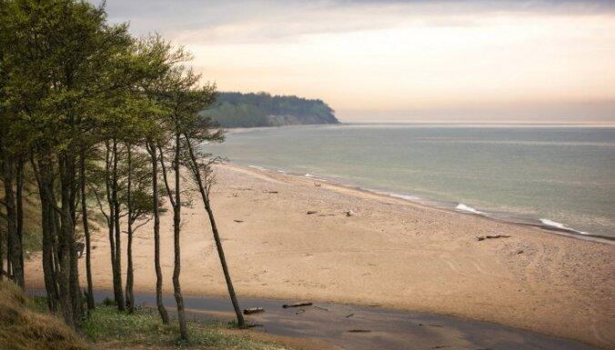 Dagnis Dubrovskis: Mežu nozares regulējumam pārmaiņas nāks par labu