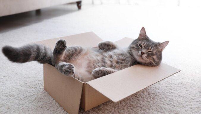 """""""Влезть в квадрат"""". Кошки способны распознавать оптическую иллюзию, выяснили ученые"""