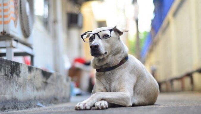 Гость флиртует? Поел мяса? 8 причин, почему собаки обнюхивают одних людей больше других