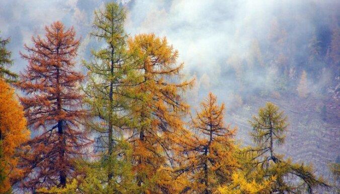 """""""Железное дерево"""" лиственница: и в воде тонет, и в огне не горит"""
