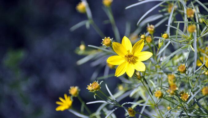 Desmit puķes, kas uzziedēs jebkurā dārzā