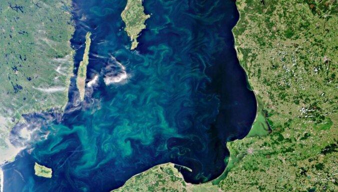 В местах для купания в Кекаве, возможно, размножаются сине-зеленые водоросли