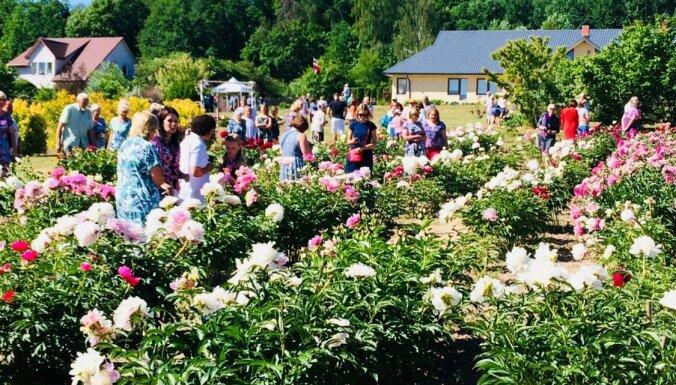 12 мест в Латвии, в которых можно полюбоваться на цветущие пионы