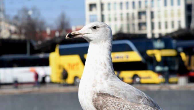 Оборот Рижского международного автовокзала в период чрезвычайной ситуации упал на 40%