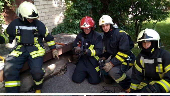 Студенты-пожарные спасли застрявшего ежика