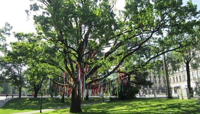 Par galvaspilsētas kokiem gādās 'Labie koki'