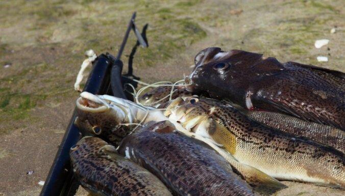 Zemūdens medības varēs piekopt jūrā un daļā iekšzemes ūdenstilpņu