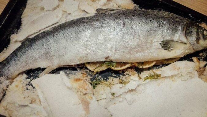 Sālī cepts lasis – iespējams, vienkāršākais veids, lai lielā zivs vienmēr izdotos sulīga