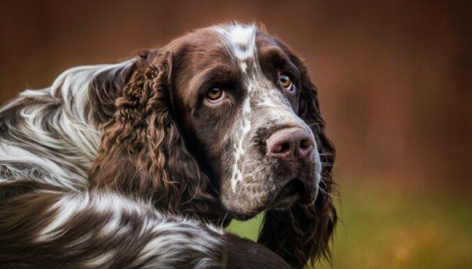 ВИДЕО: В Эстонии две собаки спасли больного диабетом мальчика в момент приступа