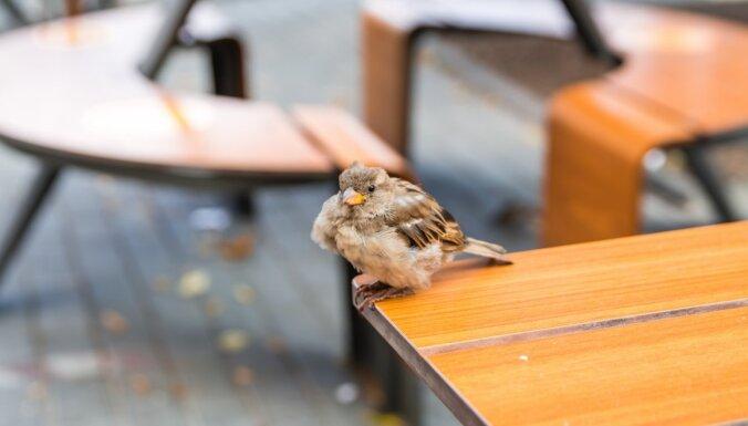 Kā turpmāk ēdīsim kafejnīcās