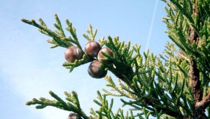 Zāļu un koku maģija jeb Augi, kas sargā, palīdz un uzlabo dzīvi