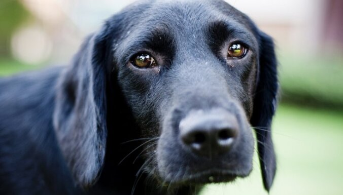 Pieci cilvēka iecienīti produkti, kas sunim var būt nāvējoši