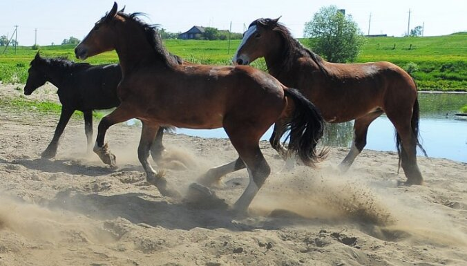 Камчатский депутат прискакал на работу на коне из-за дорогого бензина