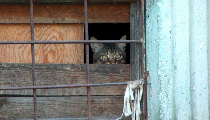 На Тейке жильцы дома нечаянно закрыли в подвале вора