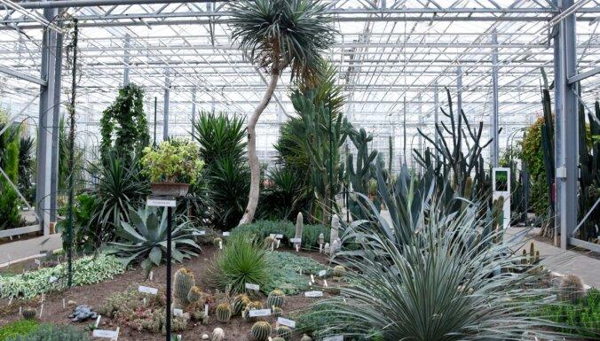 Ekspozīciju ierobežojumi un atceltas ekskursijas: Botānisko dārzu darbība ārkārtas situācijā